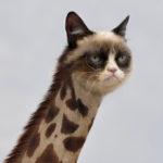 Giraffe Live CamGirl